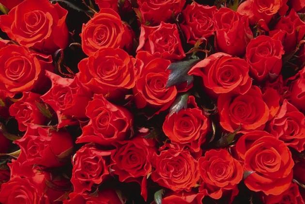 roseses
